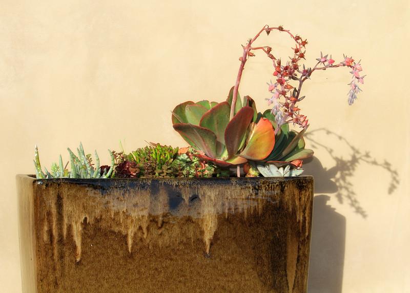 Planter at Cambria Palms.jpg