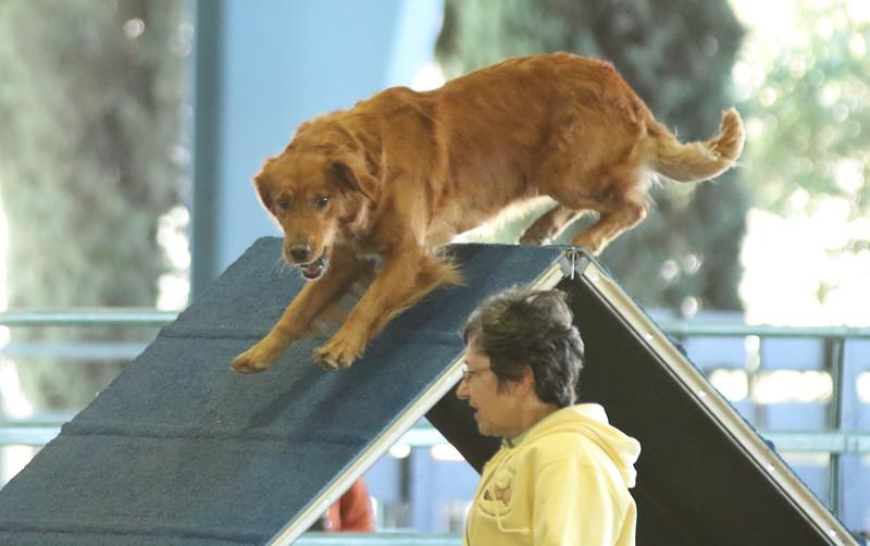 10-31-2015 Border Terrier-2403.jpg