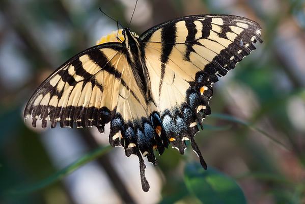 Flora and Fauna: Natural Beauty