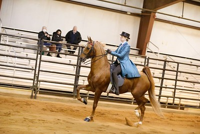 96.ASB 3-Gaited Park Stake-Open
