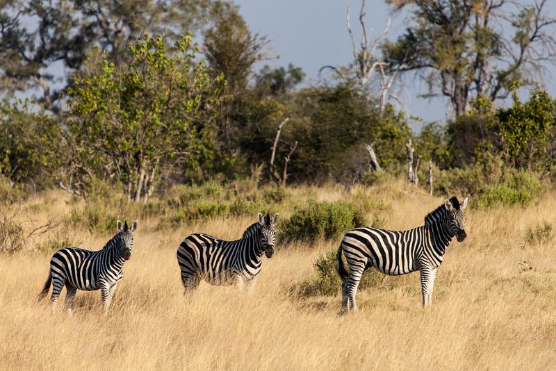 Botswana-32.jpg