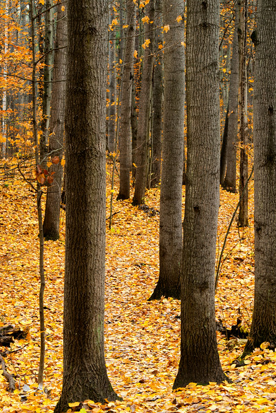 Late autumn forest_oct 26-2012_01.jpg