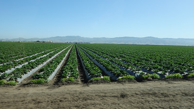 Pesticide Workshop, Salinas California