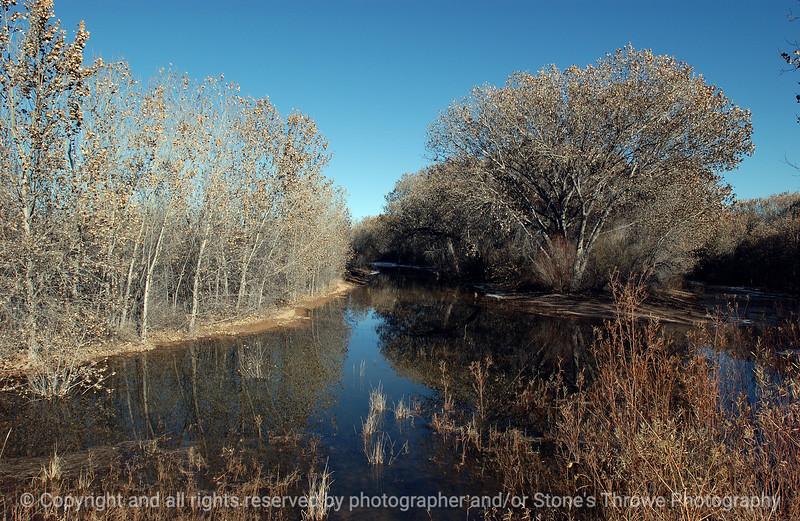 trees-bosque_del_apache_nm-01dec06-9800