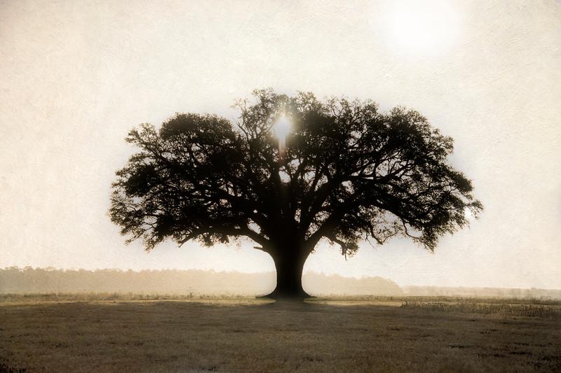 Spooner Oak Sunrise.jpg
