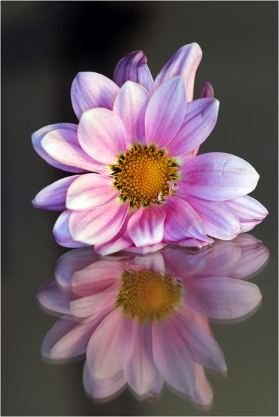20101021_20101107_Flower_08.jpg