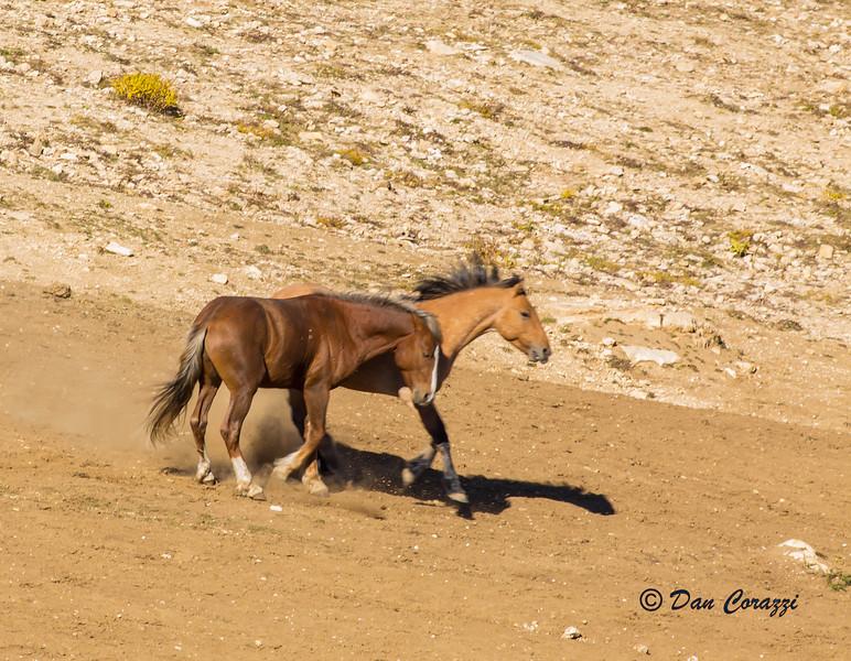 Duelng Mustangs 3-1aa.jpg