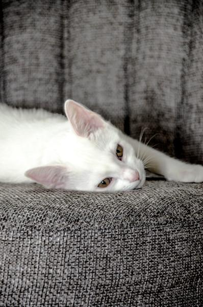 b&w cat scay_1.jpg