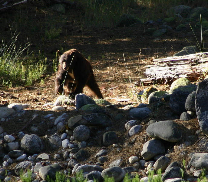 Bear2zoom.jpg