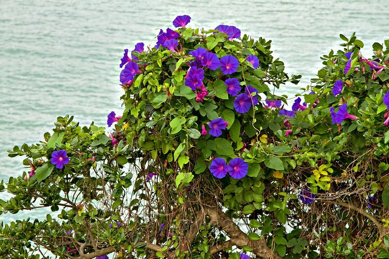 Seaside Colour