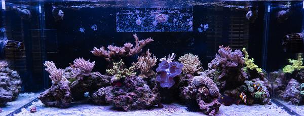 100G SPS Reef Tank