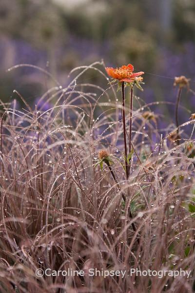 The Organic Gardens, Holt Farm-2711.jpg