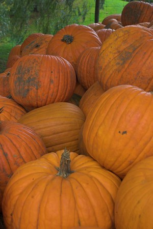 Howell Family Pumpkin Farm