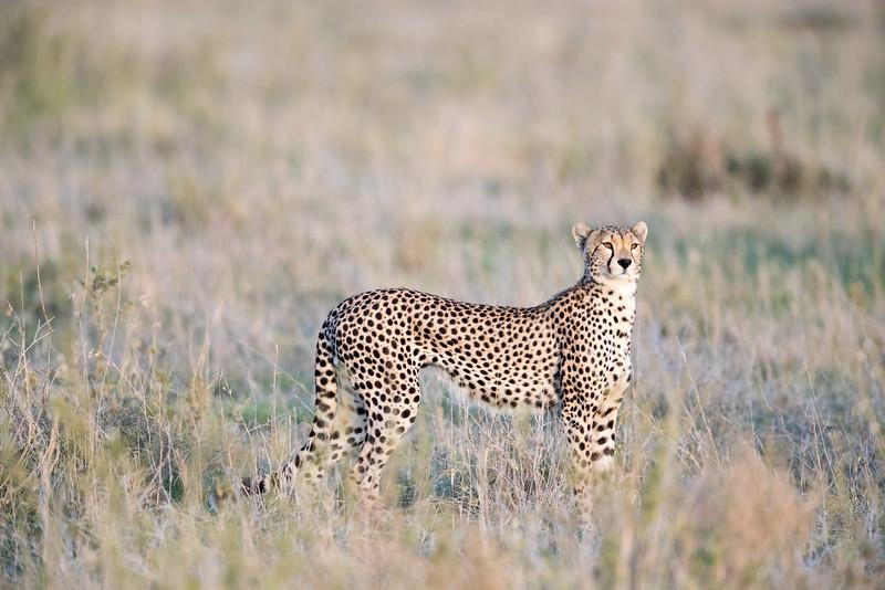 Africa - 101616 - 5876.jpg