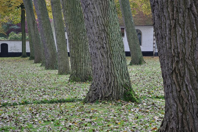 Beguinage - Brugge, Belgium - November 2, 2010
