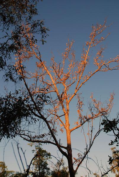 Trees at the Galiwinku Swamp, April 2008