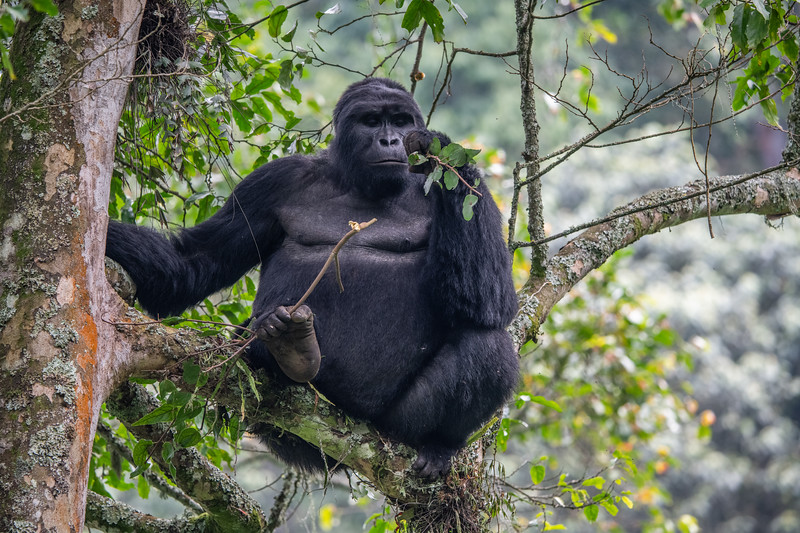 Uganda_T_Gor-2655.jpg