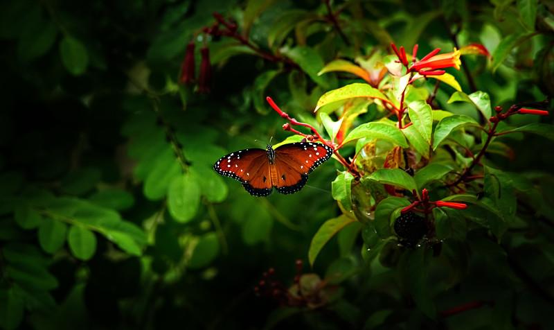 Butterflies-007.jpg