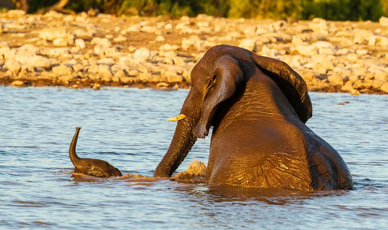 Elephant mom & calf bathing