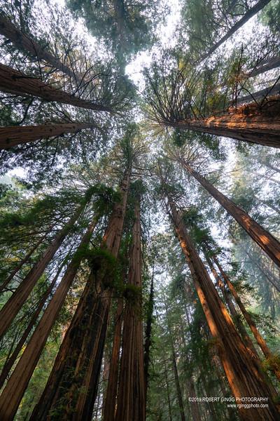Muir Woods-7124.jpg