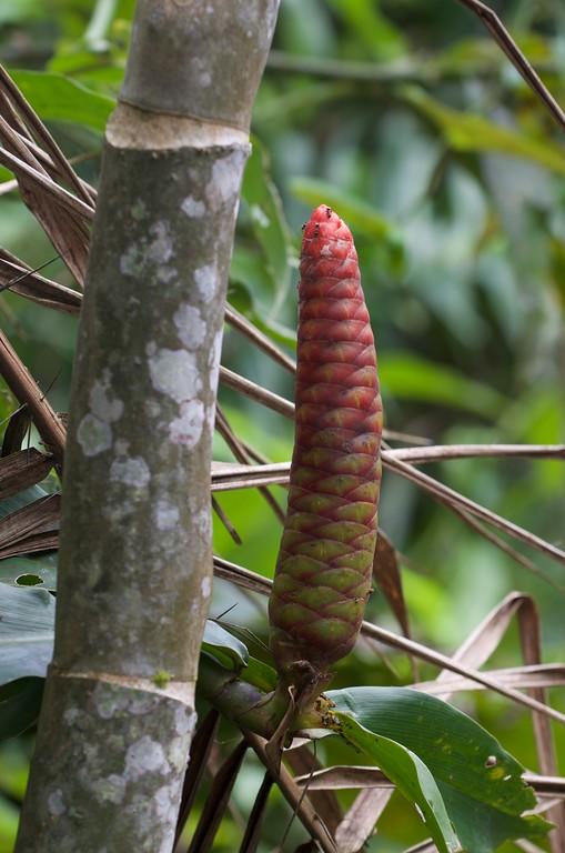 Amazon Fauna 2015