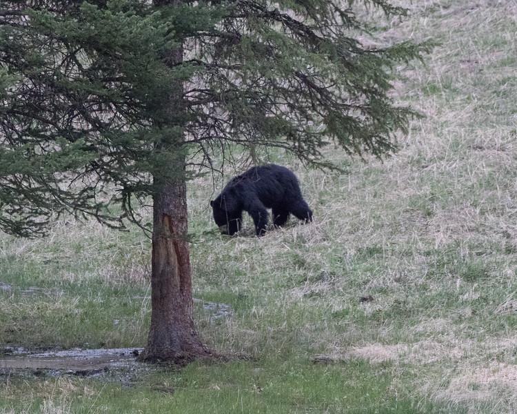 Yellowstone-2426.jpg