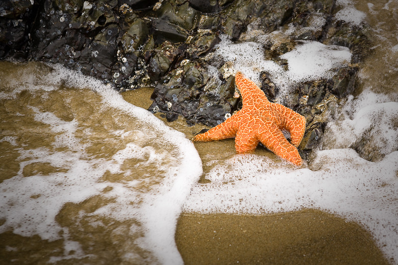 'Sea Star Relaxing' - Seal Rock State Park, Oregon