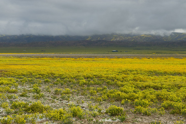 Carrizo Plain - early April wildflower trip