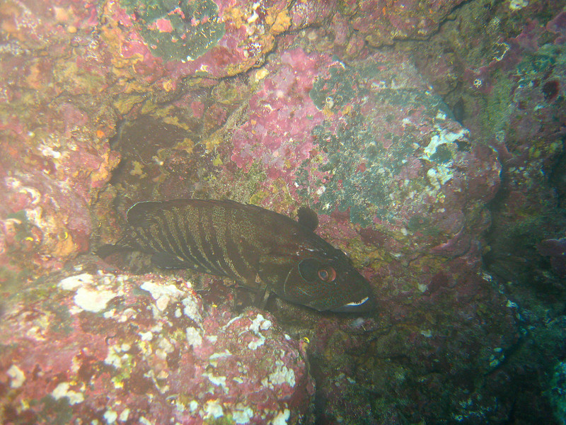 Diving in the Galapagos (376 of 392)