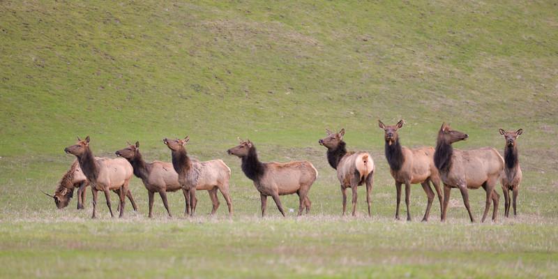 Herd Unheard 3935