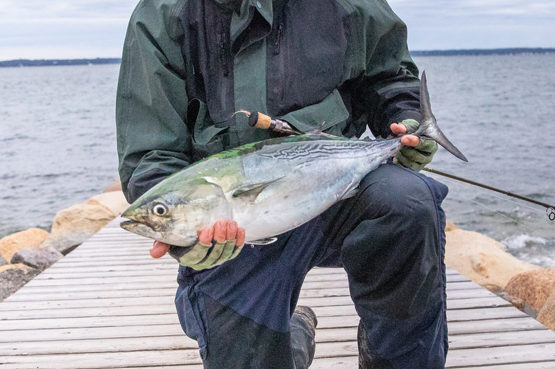 marthasvineyardderbyflyfishing.bcarmichael2018 (42 of 69).jpg