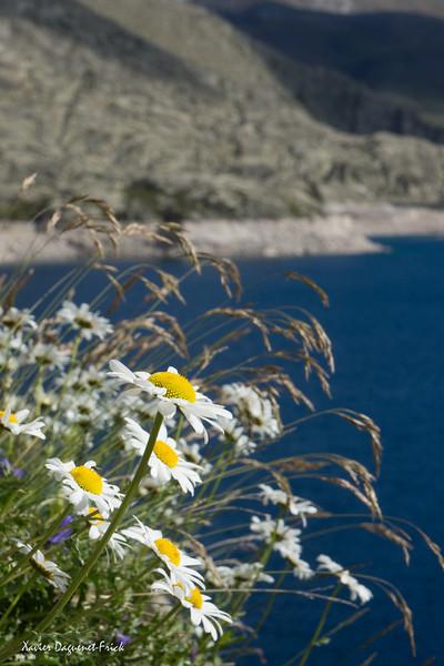 Pyrenees - Summer