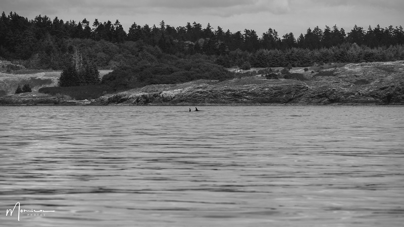 2019-08-31 - Whale Watching-2289_edit.jpg