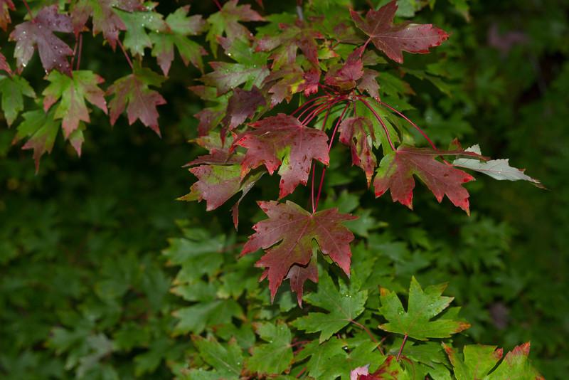 2012_10_ 13 Fall Leaves 003.jpg