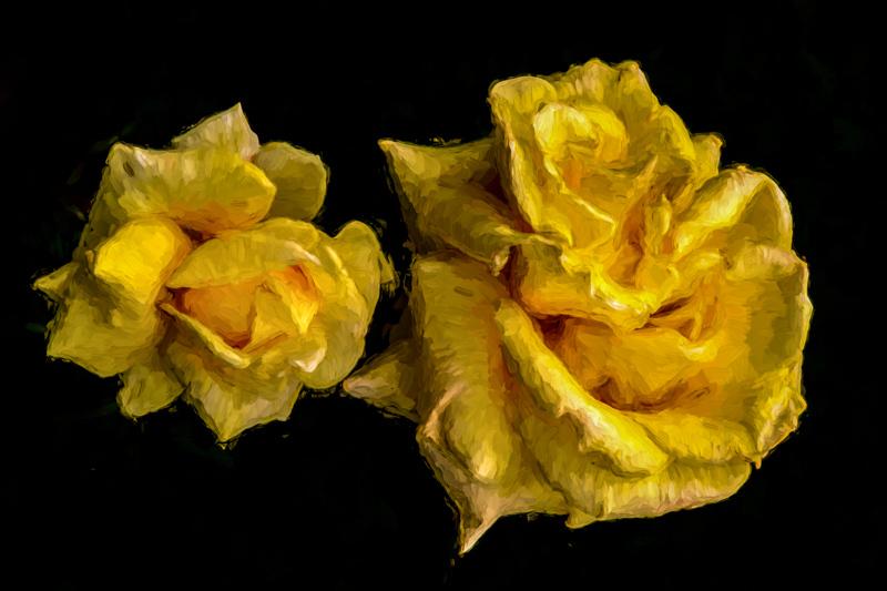 June 4 -Yellow roses floating in a sea of black.jpg