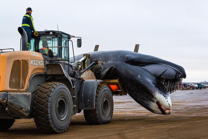 Utqiagvik Whaling-6104442-Juno Kim-nw.jpg