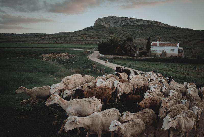 Tu-Nguyen-Destination-Wedding-Photography-Videography-Hochzeitsfotograaf-Ronda-Andalucia-Spain-Granada-Sierra-Nevada-Malaga-73.jpg
