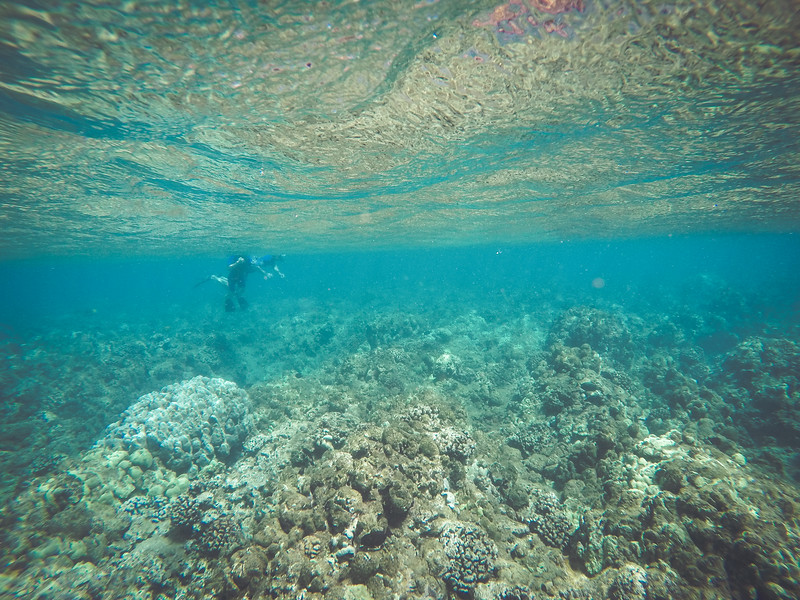 Maui, Day 2: Snorkeling with the Four Winds II!