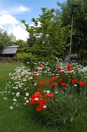 pasture and barn scenes