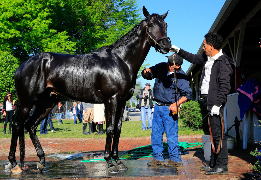 . Kentucky Derby contender Dance With Fate is bathed after working out on the track during early morning workouts at Churchill Downs on May 1, 2014 in Louisville, Kentucky.  (Photo by Jamie Squire/Getty Images)