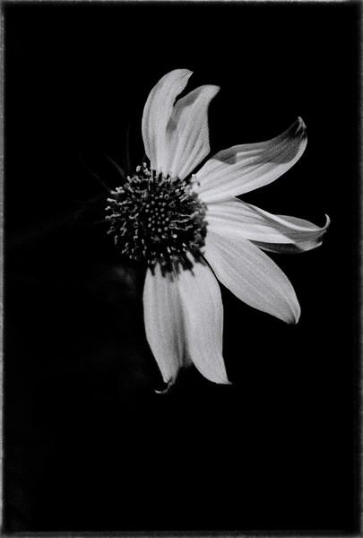 night flower 112914-.jpg