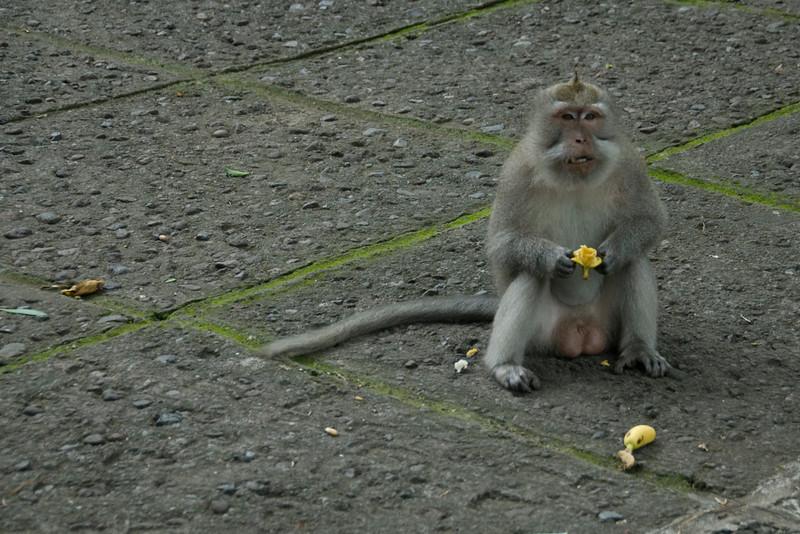 Monkey sitting on the ground holding a banana