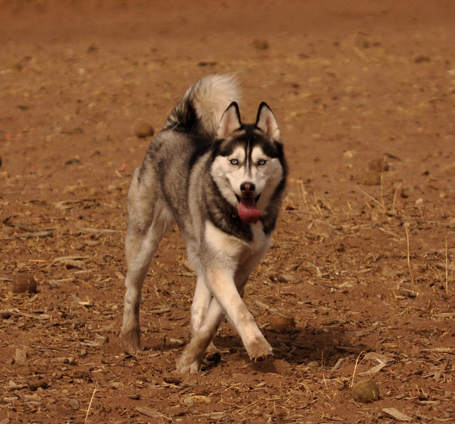 Doggie Dance.jpg