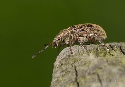 Insects, album 2 (Weevils & Bugs)