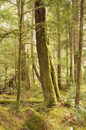 11-2013 Washington Trip- Mt. Rainier Park