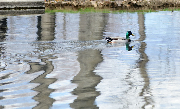 Duck feature - 041421