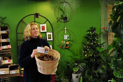 Emerald City Gardens December 2008
