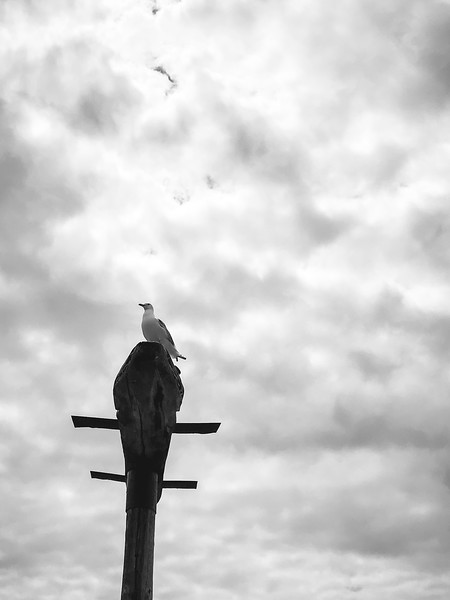 Nijole Shuberg Photography-8.jpg