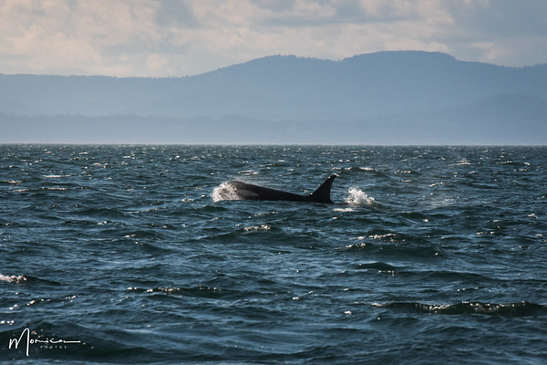 2020-07-12 - Whale Watching