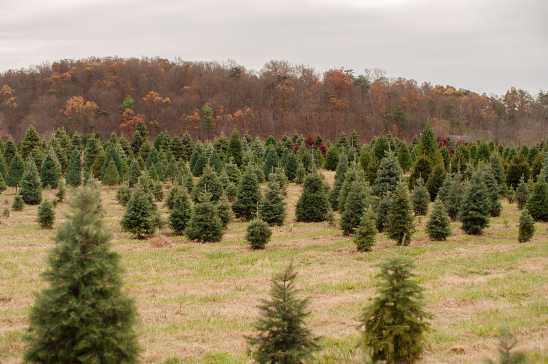 Clouse's Pine Hill Tree Farm | Fall 2019